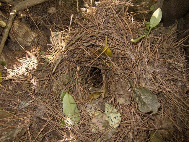 Kiwi-Nest