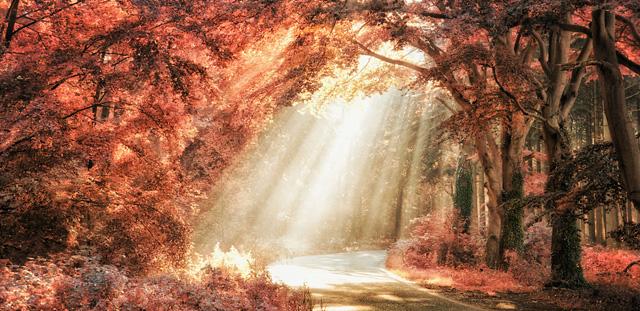 nature photography by lars van de goor incredible snaps