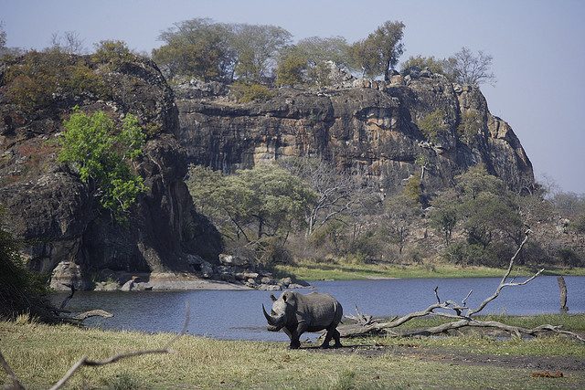 Rhino at Nduna dam by Kim Wolhuter