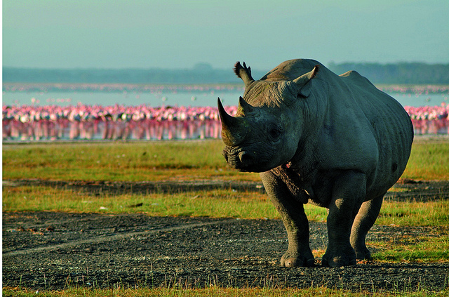 Rhino by Safari Partners