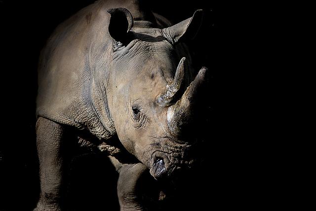Rhino by ciaran cunningham