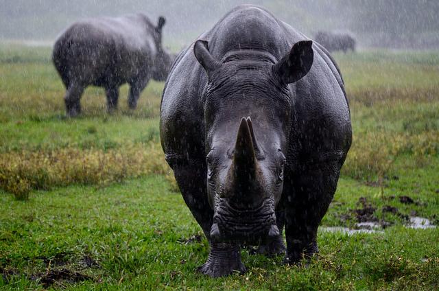 Rhino by elpanta