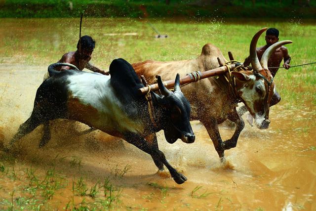 bull-sport