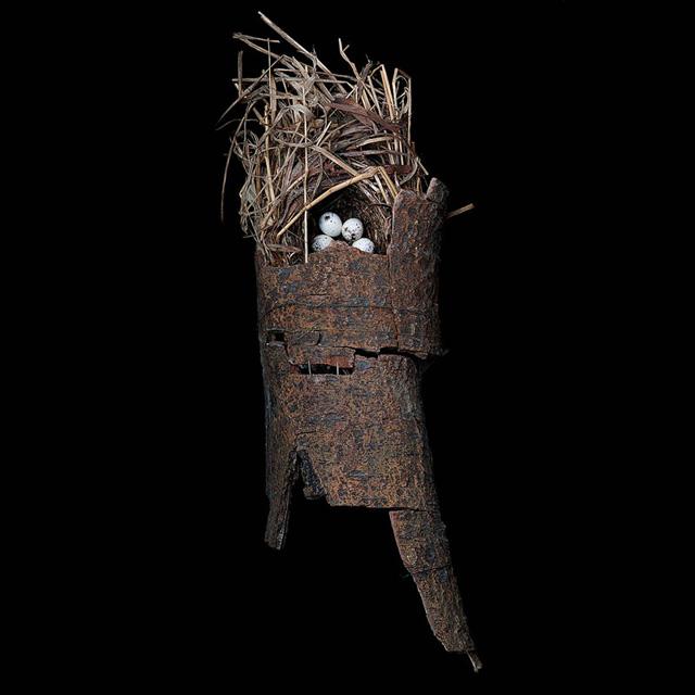 macgillivrays-warbler
