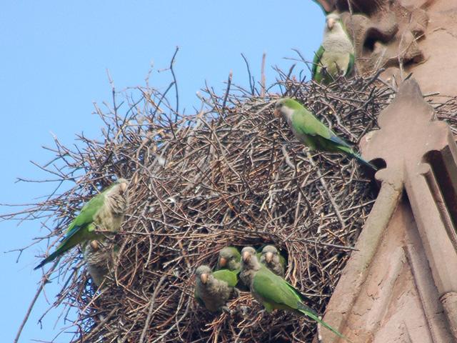 vigilant-parrots-nest
