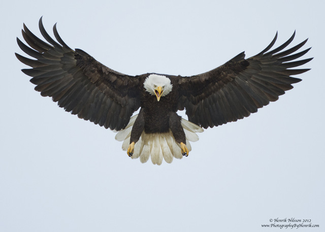 Spread Eagle by Henrik Nilsson