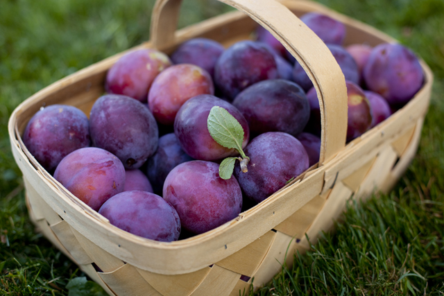 plums pictures
