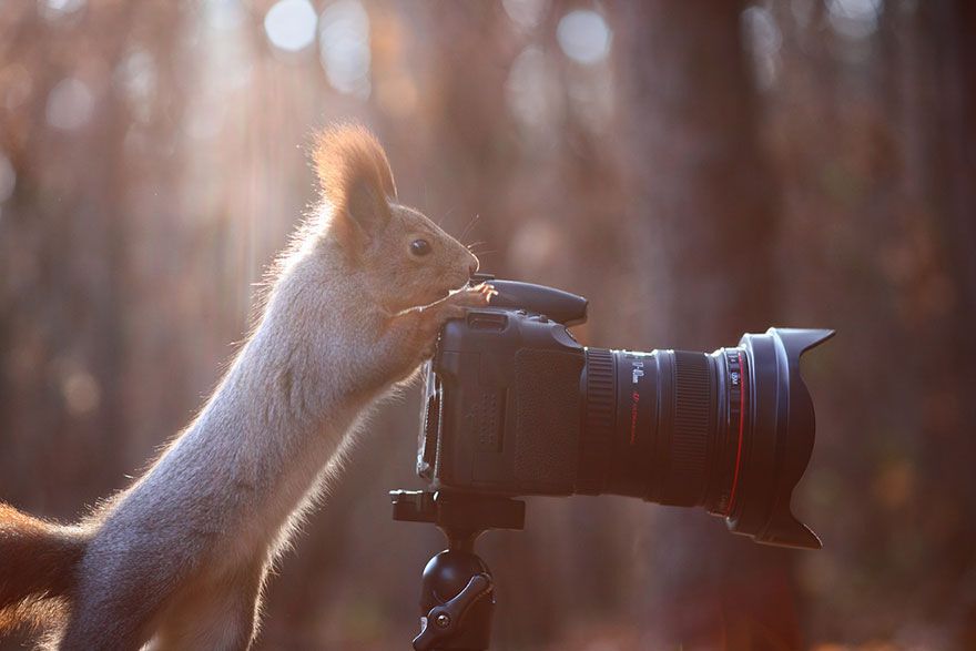 Cutest-squirrel-photography-by-vadim-trunov (10)