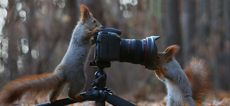 Cutest-squirrel-photography-by-vadim-trunov (11)