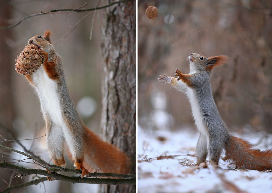Cutest-squirrel-photography-by-vadim-trunov (13)