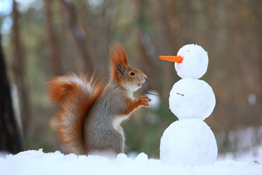 Cutest-squirrel-photography-by-vadim-trunov (2)