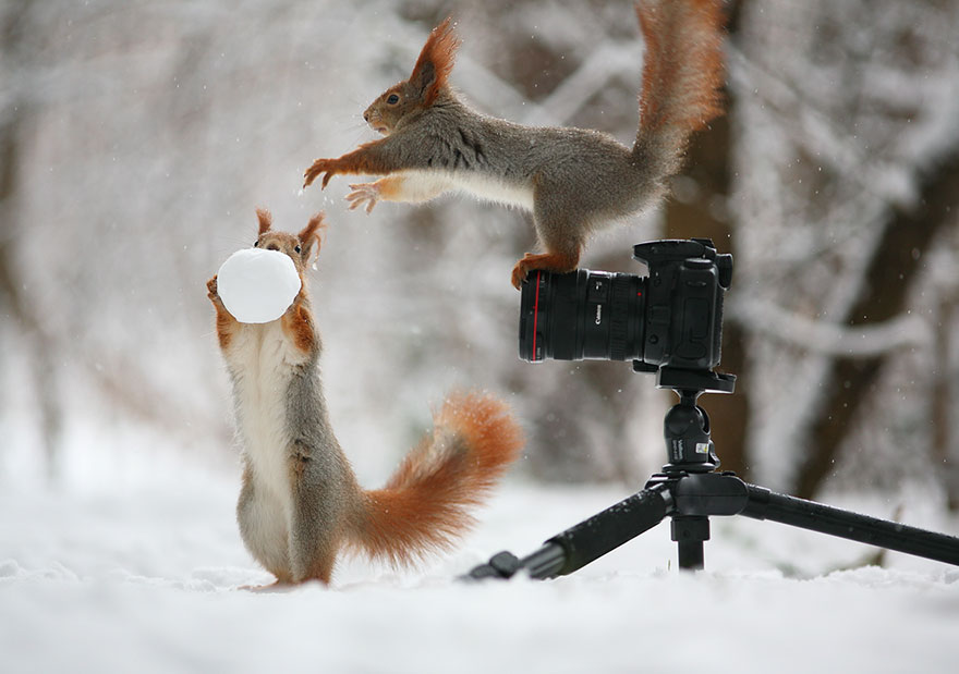 Cutest-squirrel-photography-by-vadim-trunov (5)