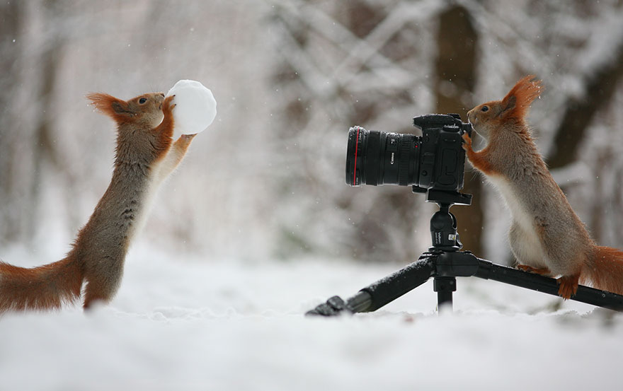 Cutest-squirrel-photography-by-vadim-trunov (6)