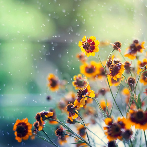Inspired Photography by Ashraful Arefin (2)