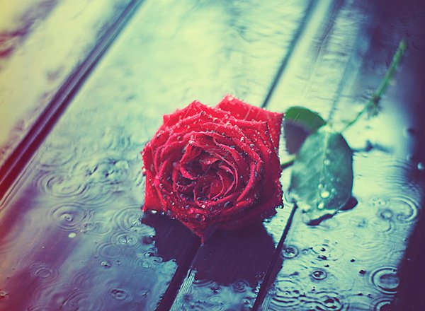 Inspired Photography by Ashraful Arefin (4)
