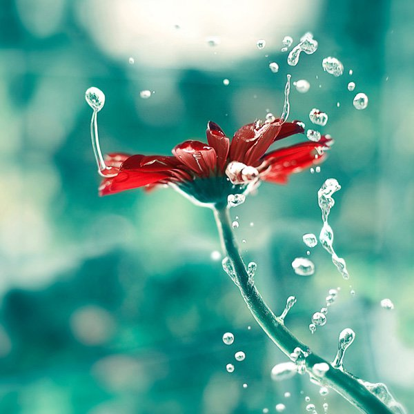 Inspired Photography by Ashraful Arefin (5)