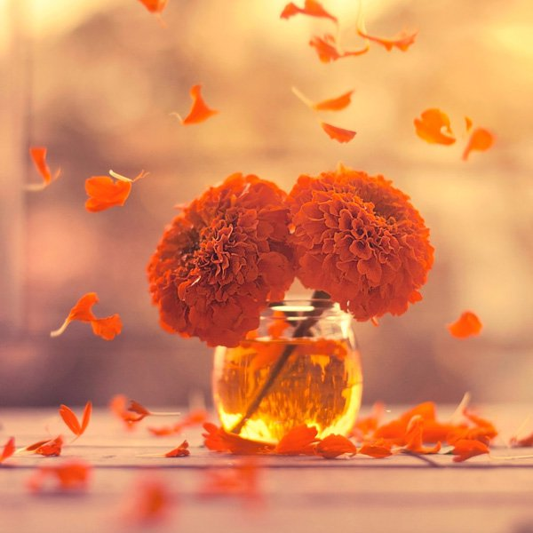 Inspired Photography by Ashraful Arefin (6)