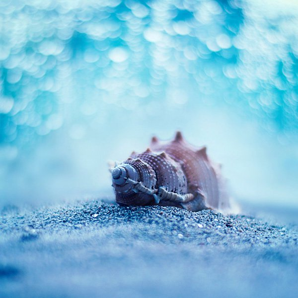 Inspired Photography by Ashraful Arefin (7)