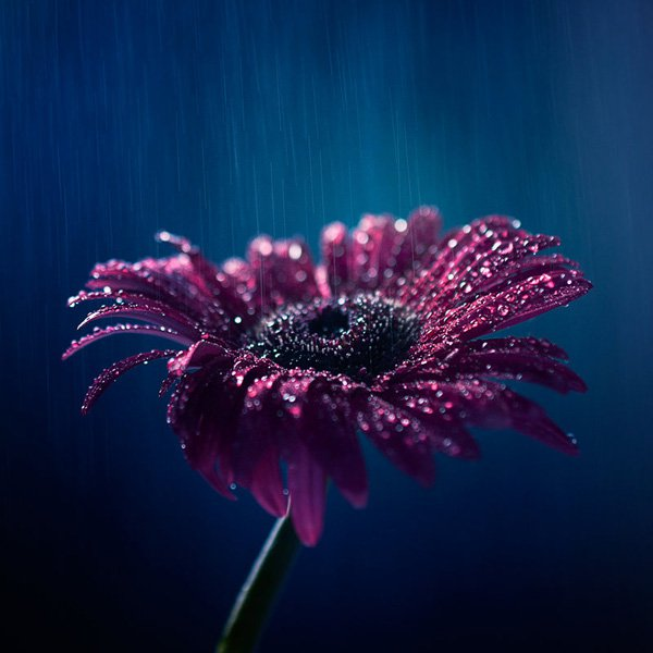Inspired Photography by Ashraful Arefin (8)