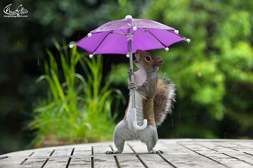Beautiful Squirrel With A Tiny Umbrella To Protect Itself From Rain (1)