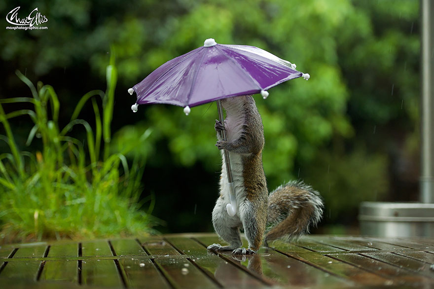 Beautiful Squirrel With A Tiny Umbrella To Protect Itself From Rain (2)