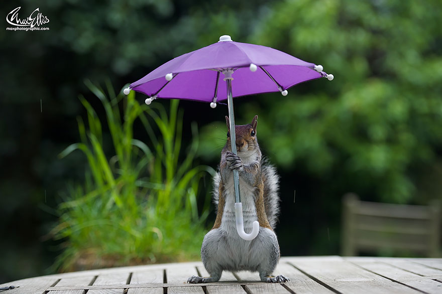 Beautiful Squirrel With A Tiny Umbrella To Protect Itself From Rain (3)