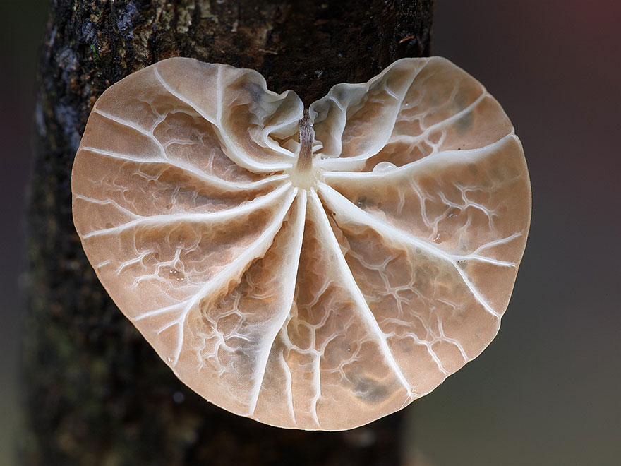 Mysterious World Of Australian Mushrooms taken by Steve Axford (10)