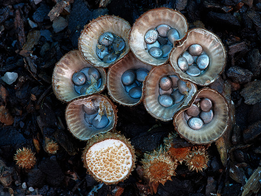 Mysterious World Of Australian Mushrooms taken by Steve Axford (12)