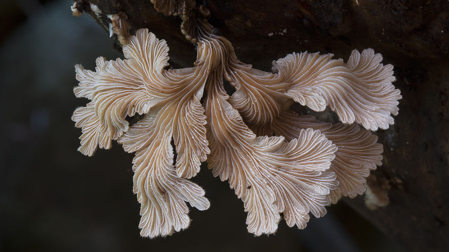 Mysterious World Of Australian Mushrooms taken by Steve Axford (15)