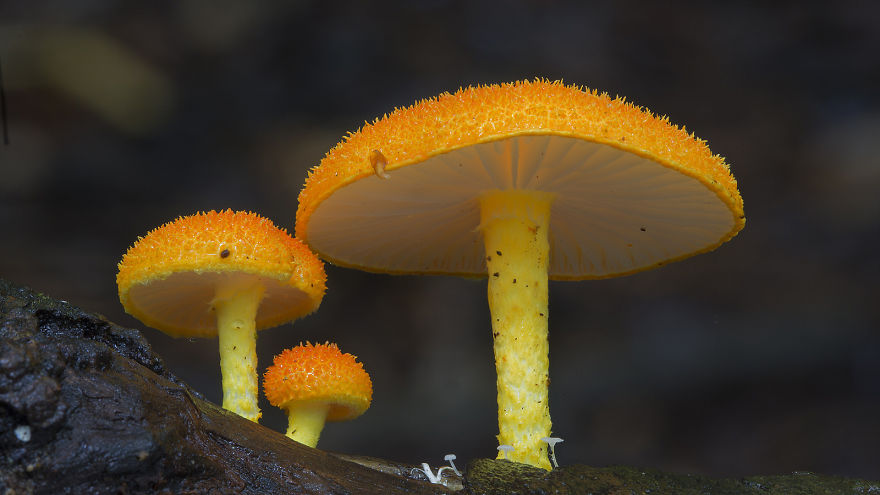 Mysterious World Of Australian Mushrooms taken by Steve Axford (16)