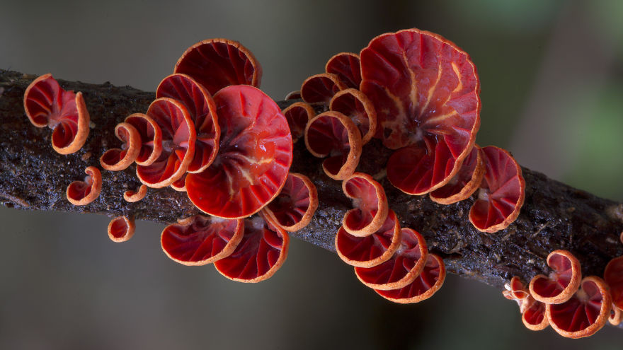 Mysterious World Of Australian Mushrooms taken by Steve Axford (19)