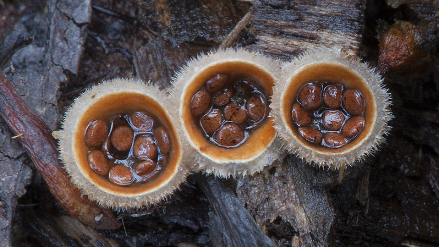 Mysterious World Of Australian Mushrooms taken by Steve Axford (21)