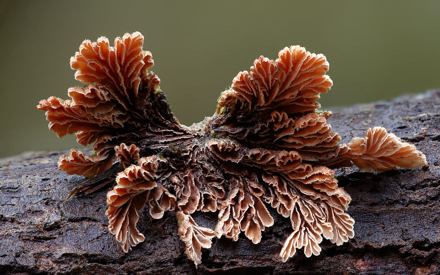 Mysterious World Of Australian Mushrooms taken by Steve Axford (6)