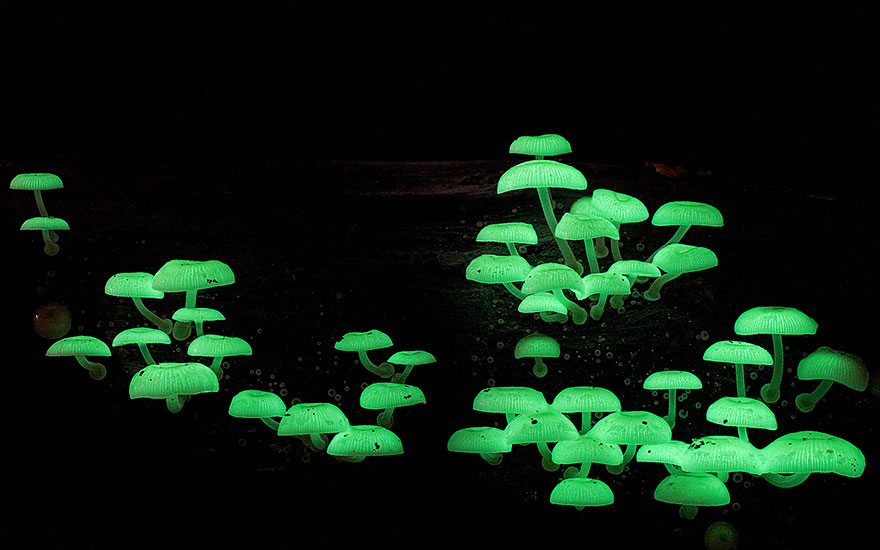 Mysterious World Of Australian Mushrooms taken by Steve Axford (7)