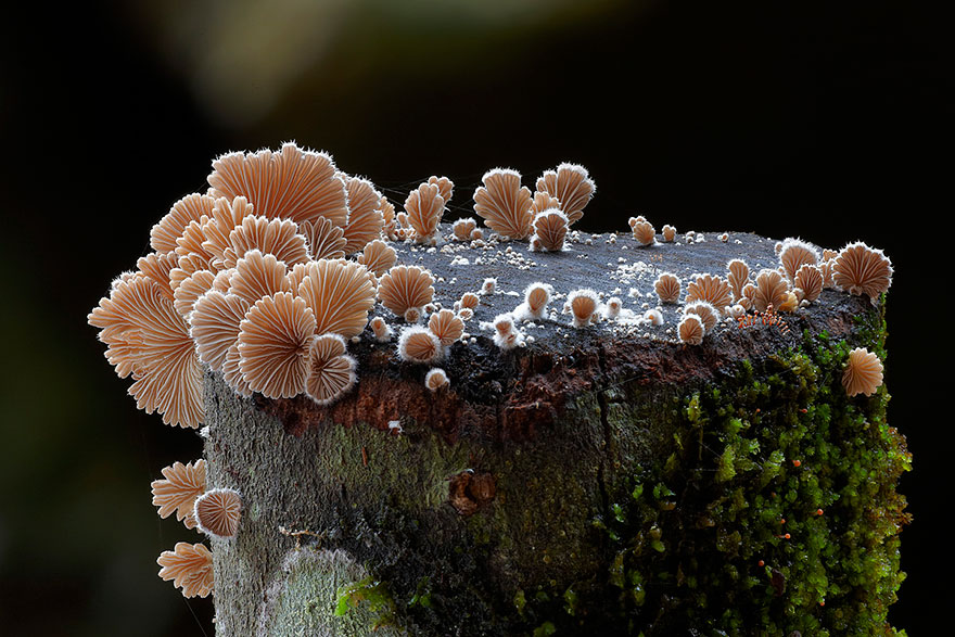 Mysterious World Of Australian Mushrooms taken by Steve Axford (8)