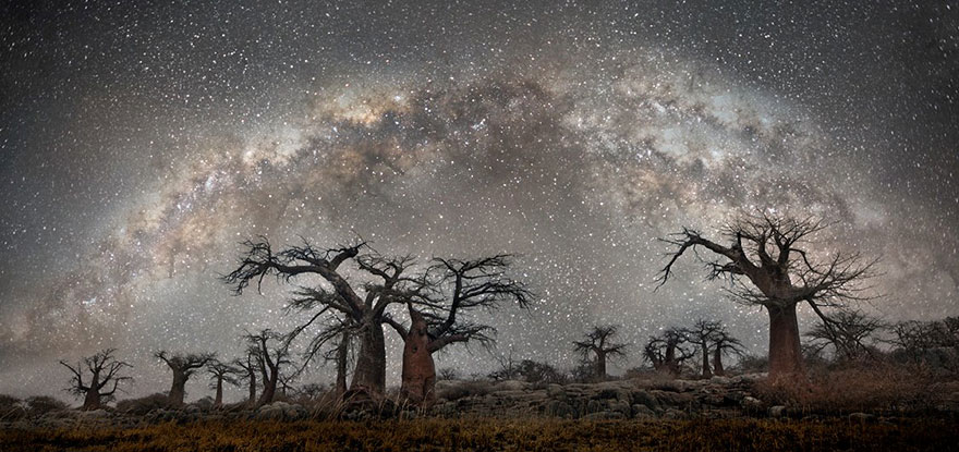 Diamond Nights of Trees by Beth Moon (1)