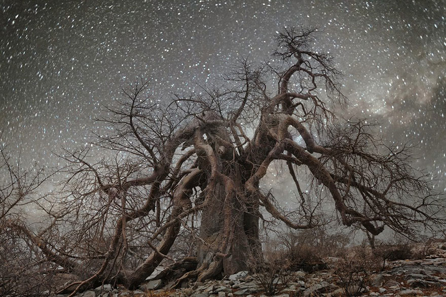 Diamond Nights of Trees by Beth Moon (10)