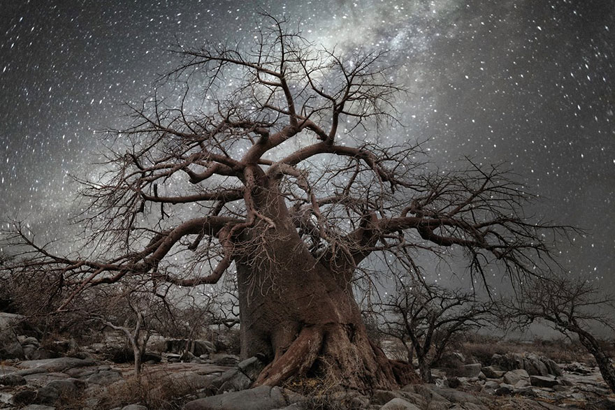 Diamond Nights of Trees by Beth Moon (3)