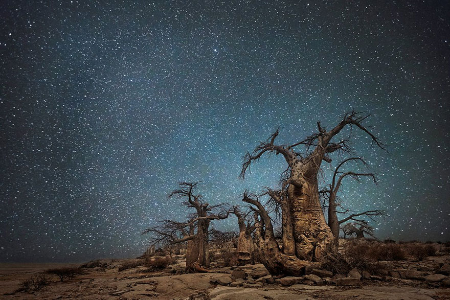 Diamond Nights of Trees by Beth Moon (4)
