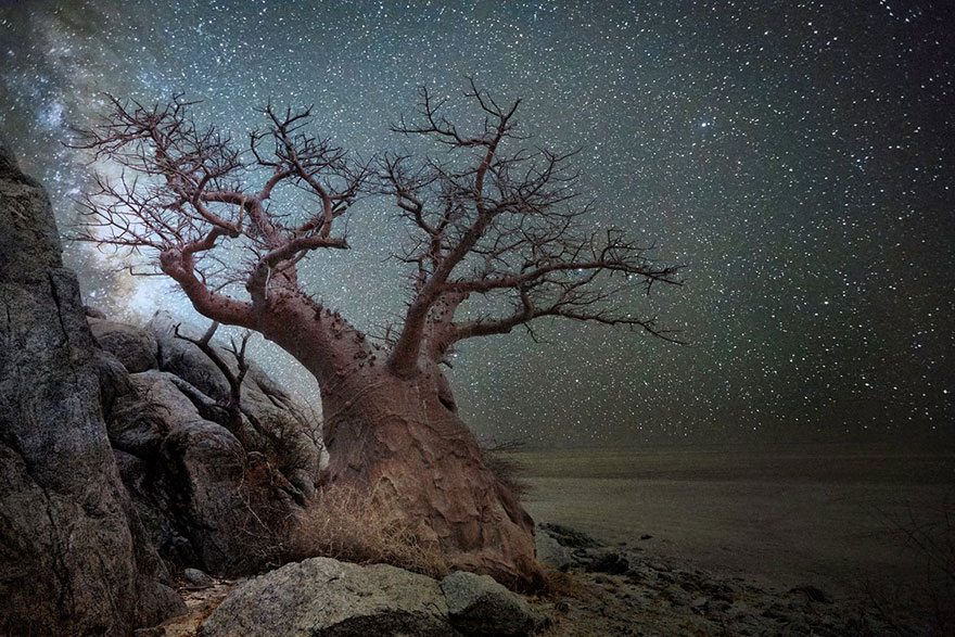 Diamond Nights of Trees by Beth Moon (5)