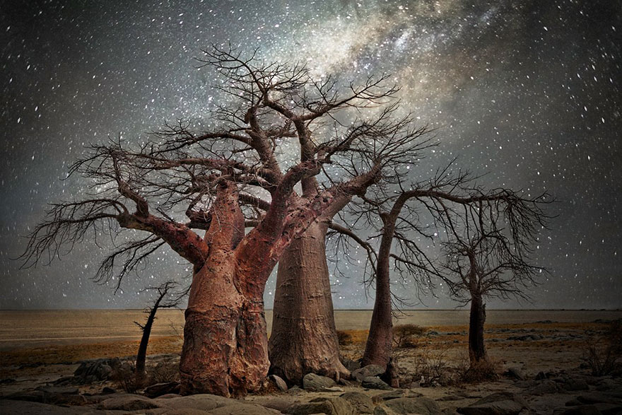 Diamond Nights of Trees by Beth Moon (6)