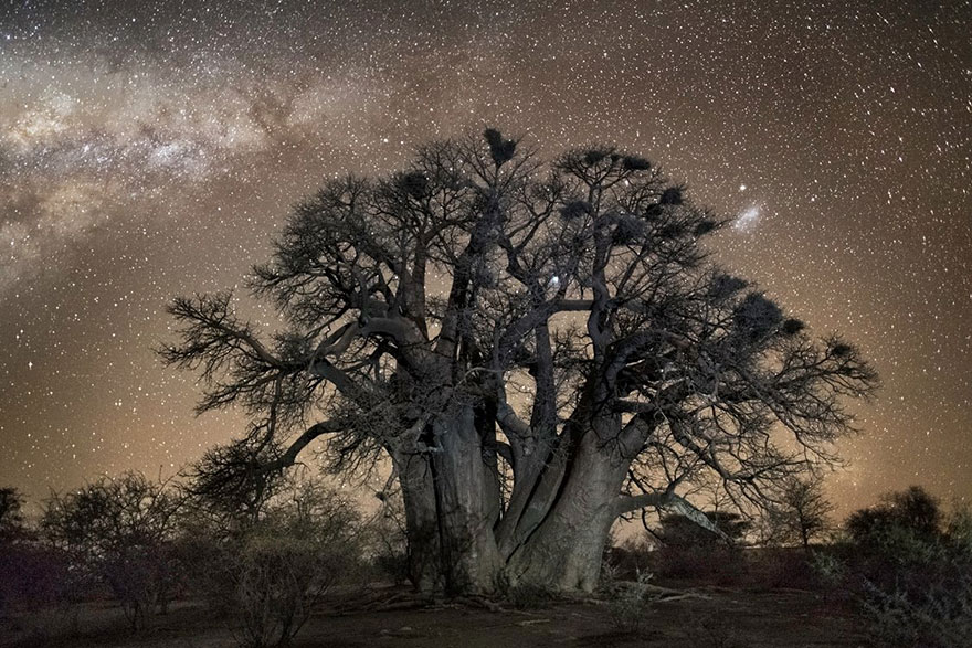 Diamond Nights of Trees by Beth Moon (9)