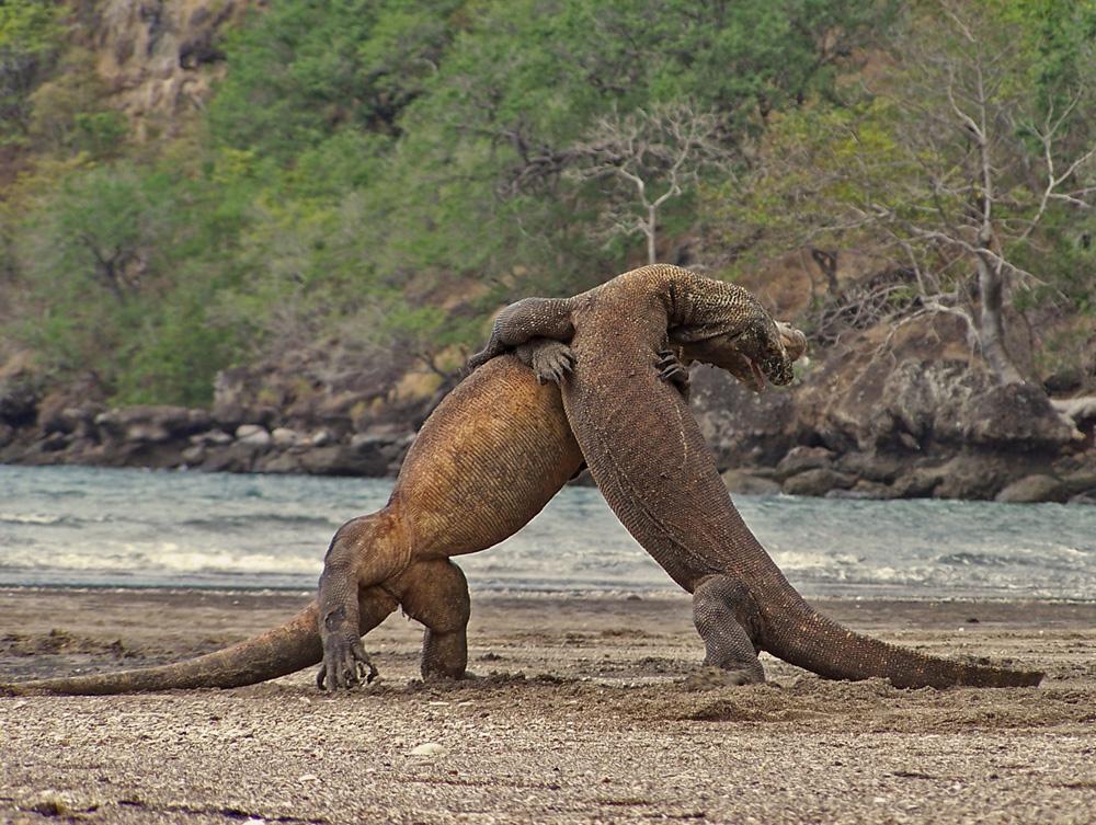 Komodo-Island,-East-Nusa-Tenggara