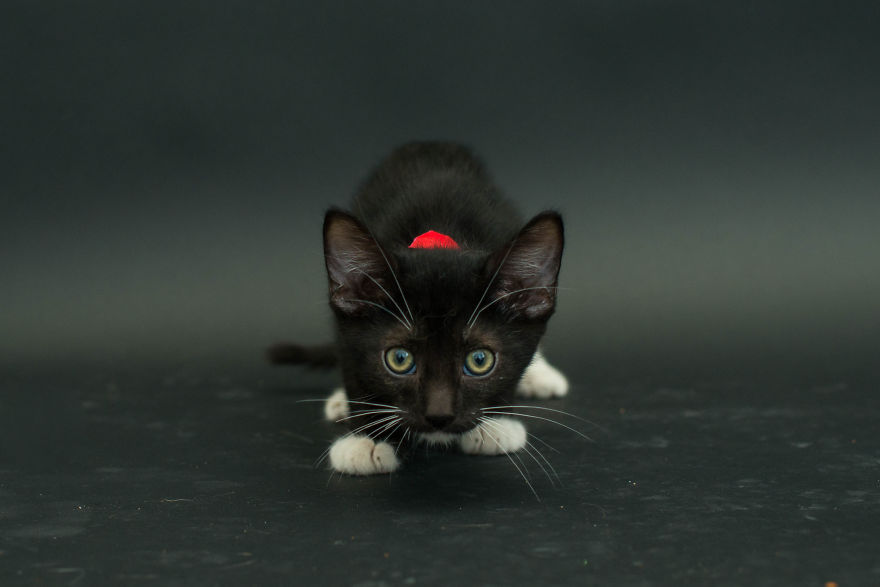 Amazing 10 facts about black shelter cats (10)