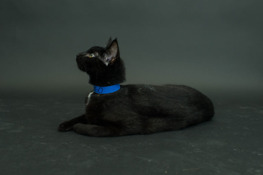 Amazing 10 facts about black shelter cats (2)