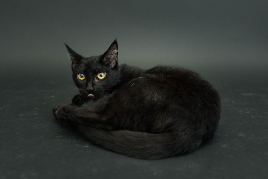 Amazing 10 facts about black shelter cats (4)