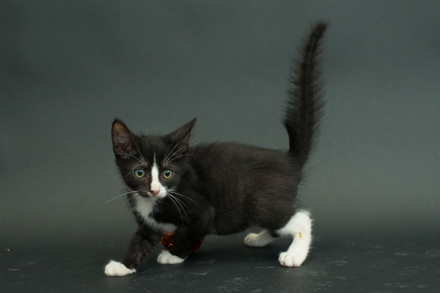 Amazing 10 facts about black shelter cats (6)