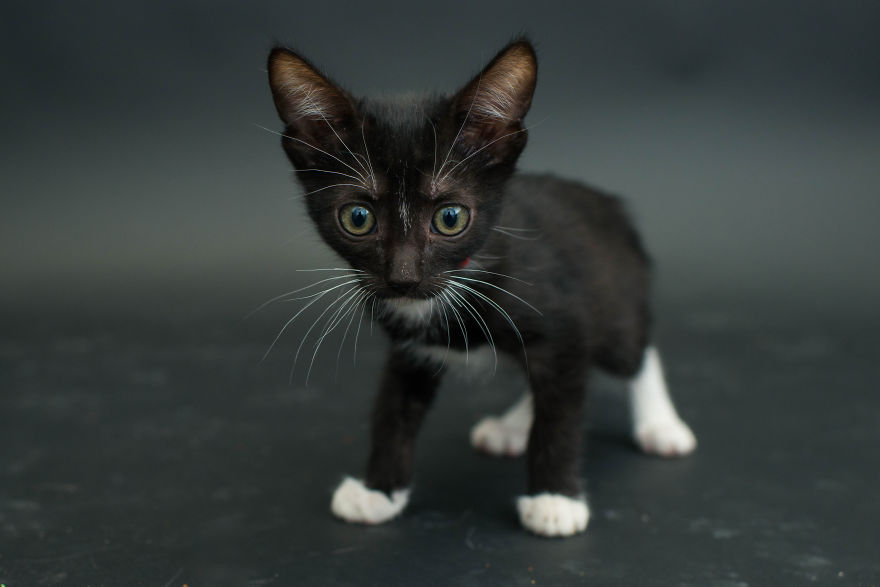Amazing 10 facts about black shelter cats (7)