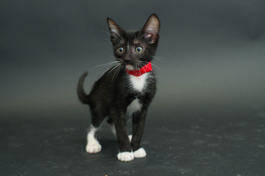 Amazing 10 facts about black shelter cats (8)