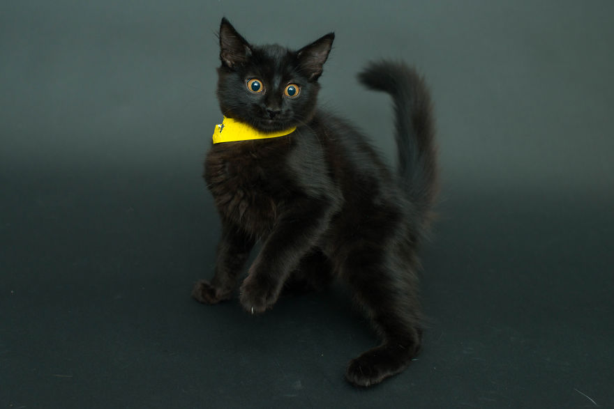 Amazing 10 facts about black shelter cats (9)